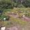 Студенческая полевая практика по ботанике
