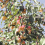 Пахнет яблоком сентябрь